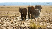 Afrika Steppe und Savanne Kenia