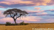 Afrika Steppe und Savanne