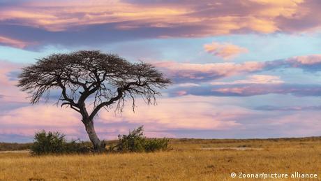 Ein Sonnenuntergang über der afrikanischen Savanne