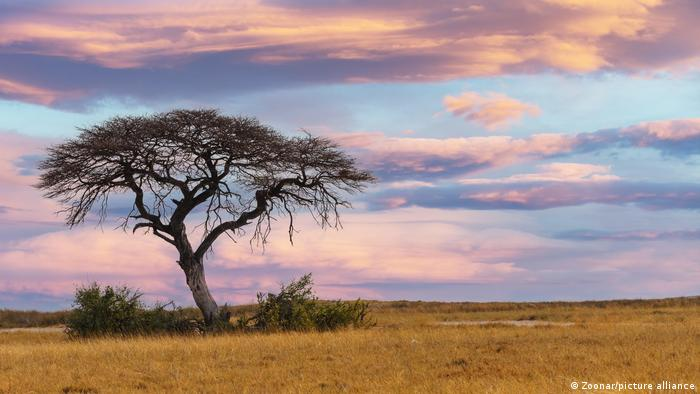 A sunset over the African savanna.