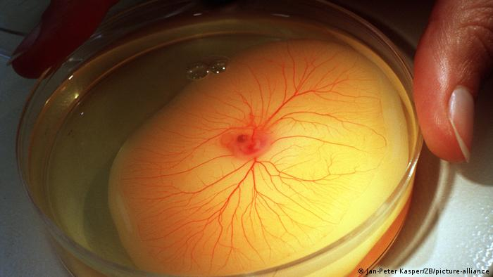 Symbolbild Thrombose Blutgerinsel