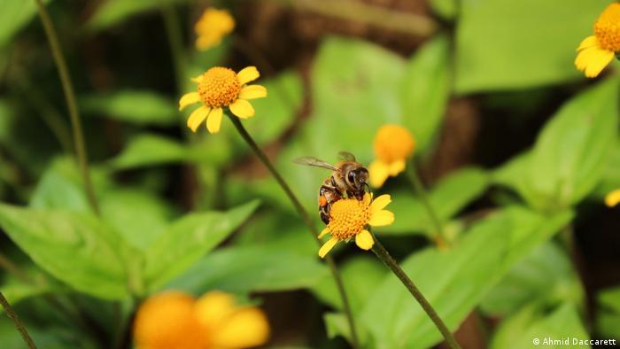Flores con una abeja de la miel.
