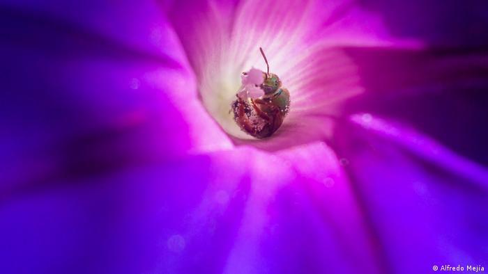Abeja en una flor.
