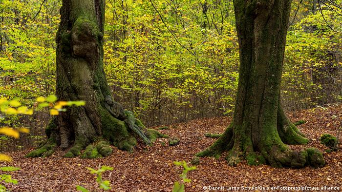 Фотография из лесной серии Йорга Дюстервальда (Jörg Düsterwald)