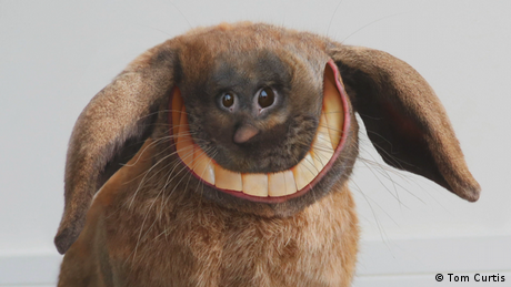 Ein bearbeitetes Foto von einem lachenden Hasen mit menschlichen Zähnen