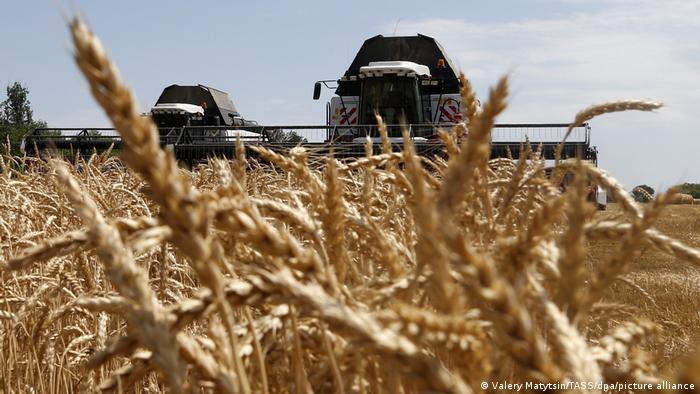 Комбайны на пшеничном поле в Ростовской области