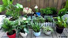 Zierpflanzen via Hendra Pasuhuk , 17.03.2021
