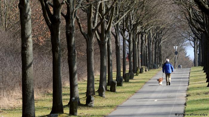 Ein Spaziergänger mit Hund ist auf einer Allee aus Beuys-Bäumen unterwegs