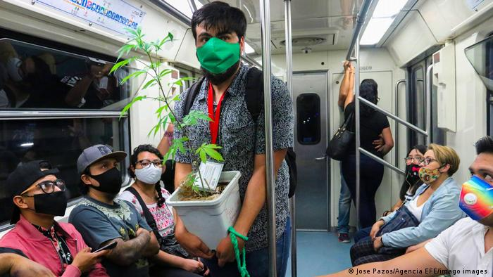 A man carrying a cannabis plant on public transport in Mexico