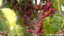 Eco Latinoamerica Bioanbau Kaffe Honduras