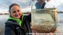 Christina Hiegel von der Landwirtschaftskammer Niedersachsen hält an der Elbe ein Glas mit Glasaale in den Händen. Mit rund 450 000 ausgesetzten Jungaale soll der Bestand der Wanderfische in der Elbe gesichert werden.