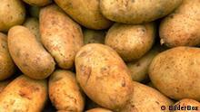 Flash-Galerie Geschichte der Kartoffel