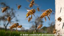USA Symbolbild Bienen