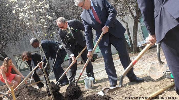 Diplomats plant a tree at the UN in New York
