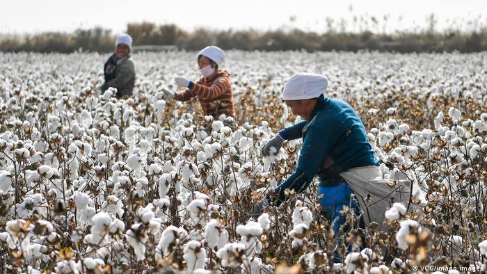 ¿Trabajo esclavo en China? Uigures en una plantación de algodón en Xinjiang.