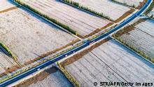 "*** Dieses Bild ist fertig zugeschnitten als Social Media Snack (für Facebook, Twitter, Instagram) im Tableau zu finden: Fach ""Images"" —> Xinjiang - Uighuren/Baumwollanbau *** 25.03.21 ***This photo taken on October 14, 2018 shows a view of cotton fields during harvest season in Hami in China's northwestern Xinjiang region. (Photo by STR / AFP) / China OUT (Photo credit should read STR/AFP via Getty Images)"