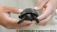 Galapagos Schildkröte Symbolbild Handel