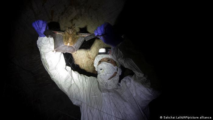 Los investigadores de Tailandia han estado recorriendo el campo para capturar murciélagos en sus cuevas en un esfuerzo por rastrear los turbios orígenes del coronavirus.