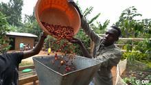 77 Percent report on coffee business in Uganda