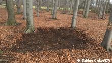 Подметенный лес