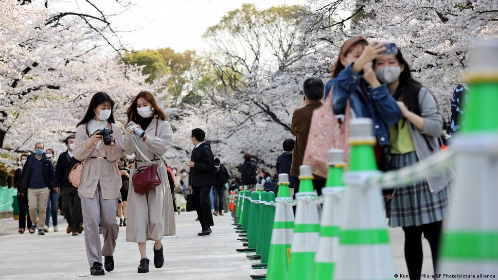 How To See Japan S Cherry Blossoms This Year Japan Cherry Blossom Festival Cherry Blossom Japan Cherry Blossom Festival
