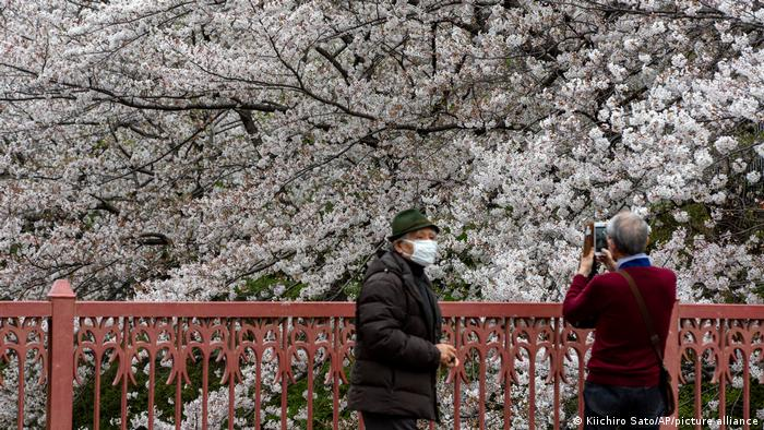 Japan Earliest Cherry Blossom Season Peak On Record News Dw 30 03 2021