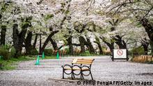 Weltspiegel 31.03.2021 | Japan | Inokashira Park in Tokio