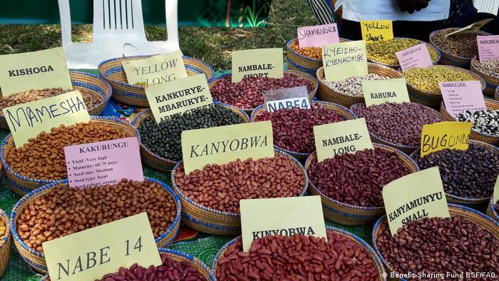 Bean diversity in Malawi: Various regional bean varieties on sale in bowls at a market.