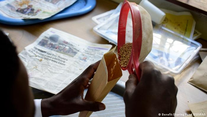 A Hoima Community Seed Bank (CSB) employee in Uganda fills a bag with seeds.