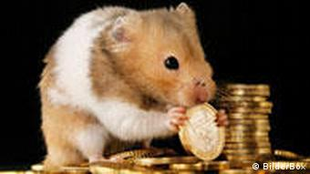 Maus knabbert an einem Euro