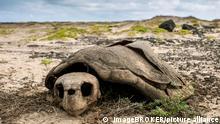 Afrika, Kap Verde | Skelett einer unechten Karrettschildkröte