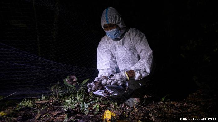 غالبا شکارچیان ویروس تنها بعد از ساعتها جستوجو در جنگلهای انبوه آن چه را که به دنبالش هستند پیدا میکنند. پس محتاطانه پیش بروید: خفاشهای کوچک را بگیرید و با احتیاط به داخل کیسههای پارچهای مناسب بیاندازید تا بعد بررسی شوند.