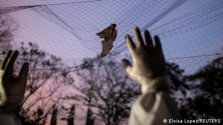 A hand reaches up for a bat caught in a net