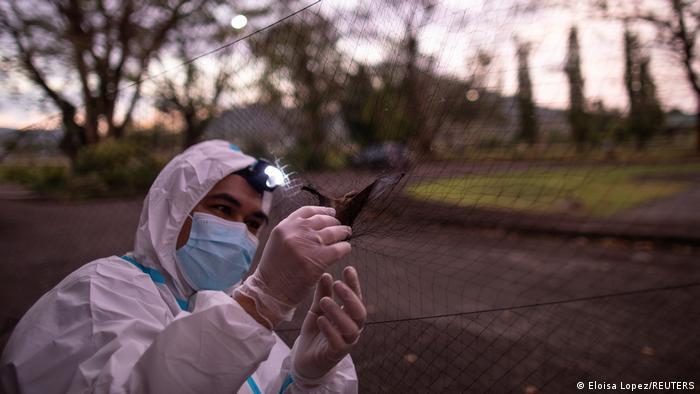 فیلیپ آلویولا، کارشناس بومشناسی و رئیس این گروه تحقیقاتی میگوید: «ما در تلاشیم سایر ویروسهای کرونا که توانایی انتقال به انسان دارند را بررسی کنیم.» او بیش از یک دهه است که راجع به ویروسهای منشاءگرفته از خفاش تحقیق میکند.