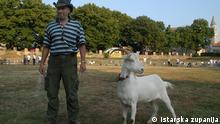 Istrien | Viehzucht | Ziegen
