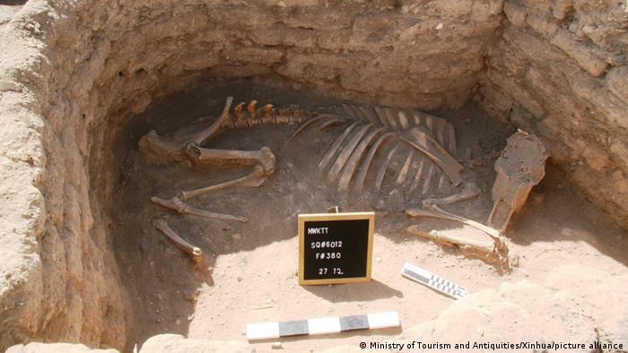 این عکس که روز هشتم آوریل (۱۷ فروردین) سال جاری گرفته شده، اسکلت حیوانی را نشان میدهد که هزاران سال در زیر شنهای کویر مدفون بوده است.