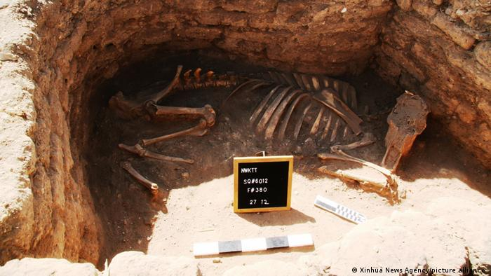 Знайдені на місці розкопок останки тварини