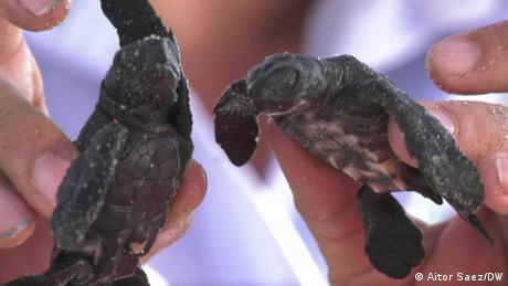 Eco Latinoamerica Schildkröten an der Küste von El Salvador