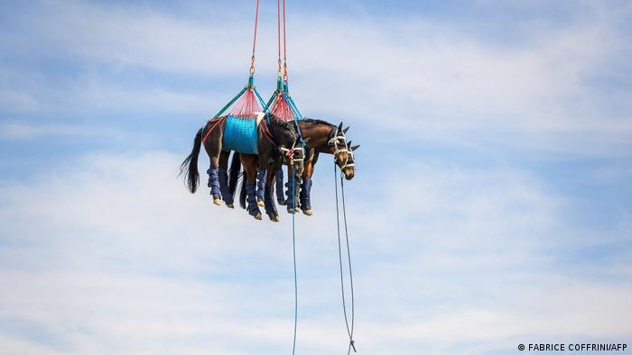 ... voze se helikopterom u Švajcarskoj. Radi se o eksperimentu veterinarskog fakulteta i vojske, a cilj je da se vidi koliko konja i koliko brzo mogu da budu transportovani u slučaju povrede. Izveštavaćemo redovno o tome dokle su Švajcarci stigli u ovom istraživanju.