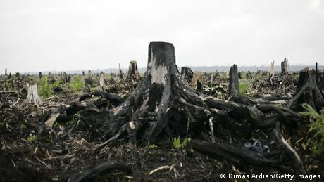 Symbolbild I Brandrodung für Palmöl-Plantagen