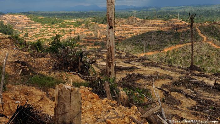 Plantaža za palmino ulje u Maleziji