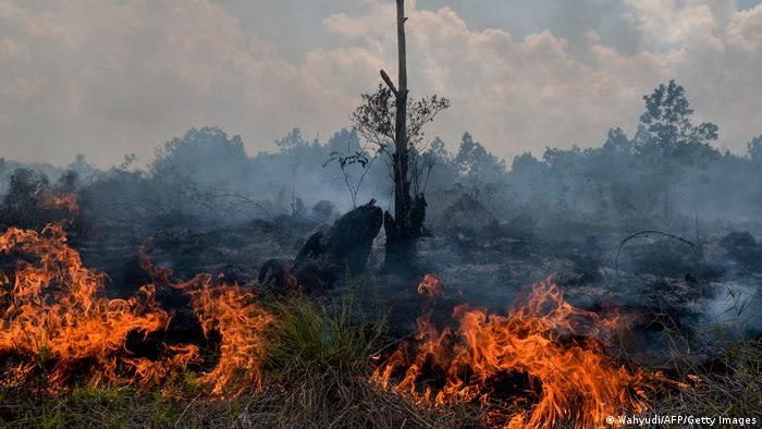 Incendio de superficies boscosas para plantaciones de palma aceitera.