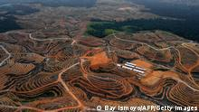 This photograph taken on February 24, 2014 during an aerial survey mission by Greenpeace at East Kotawaringin district in Central Kalimantan province on Indonesia's Borneo Island, shows cleared trees in a forest located in the concession of Karya Makmur Abadi which is being developed for a palm oil plantation. Environmental group Greenpeace on February 26 accused US consumer goods giant Procter & Gamble of responsibility for the destruction of Indonesian rainforests and the habitat of endangered orangutans and tigers. AFP PHOTO / Bay ISMOYO (Photo by Bay ISMOYO / AFP) (Photo by BAY ISMOYO/AFP via Getty Images)