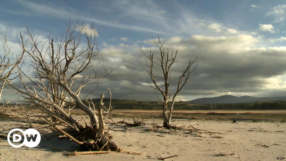 Eco Check: Soil destruction and food scarcity
