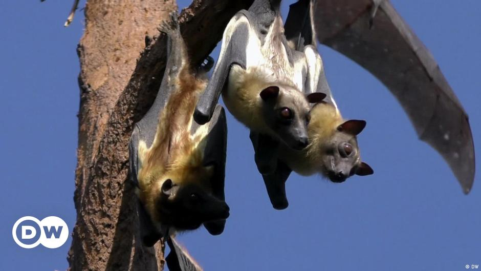 Saving Rwanda's bats by harnessing people power