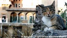 Italien Rom Area Sacra Katzen in Ruinen
