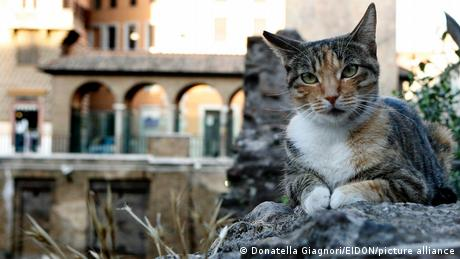 One of the many feline residents at the Largo di Torre Argetina.