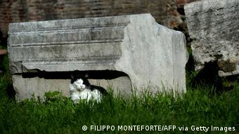 Γάτα Αrea Sacra