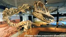 Ausstellung Projekt Dino