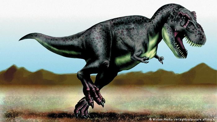 Так выглядел Tyrannosaurus Rex
